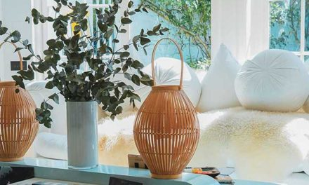Best Indoor Plants That Clean the Air and Remove Toxins