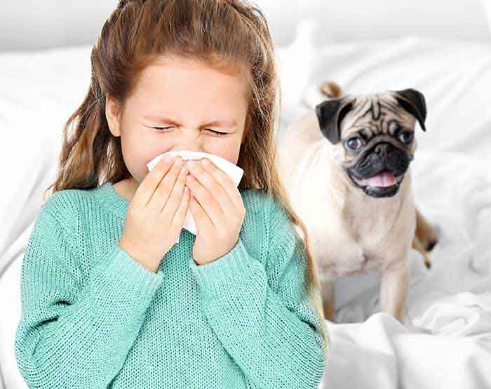 How Pet Dander in the Home Can Be Affecting Your Health